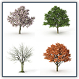 Four trees represent the four seasons